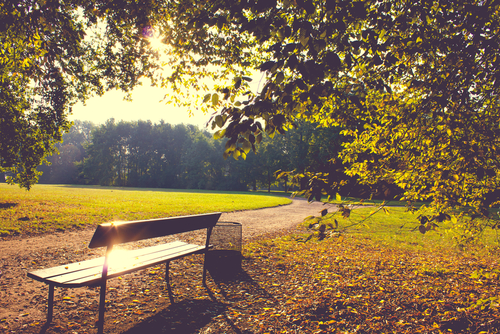 photo of a park bench with sunlight shining on it